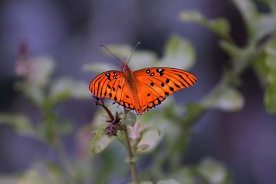 Photograph - The Orange Wings by Lily K
