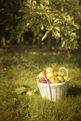 Apple Photograph - The Orchard by Amanda Elwell