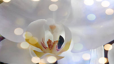 Photograph - The Orchid With Flashing Light by Xueyin Chen