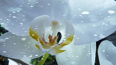 Photograph - The Orchid With Snow by Xueyin Chen