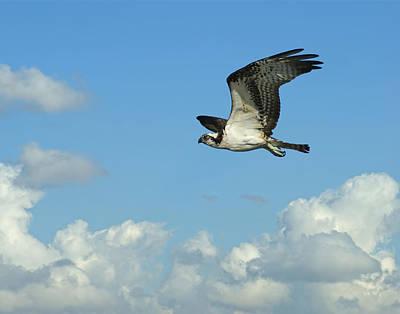 Osprey Photograph - The Osprey 2 by Ernie Echols