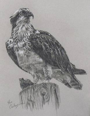 Osprey Drawing - The Osprey by Pam Earleywine