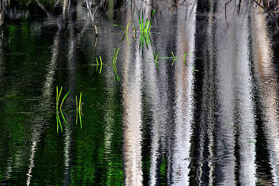 Photograph - The Other Reflections Of A Swamp by Dawn J Benko