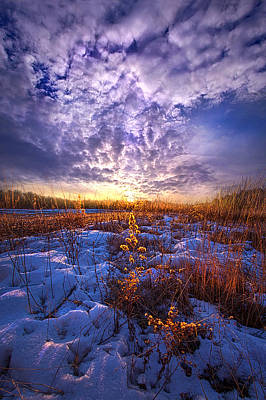 Red Leaves Snow Wall Art - Photograph - The Other Side Of Waking by Phil Koch
