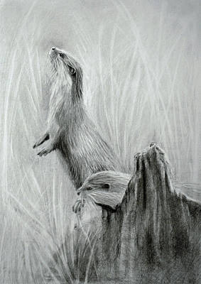 Drawing - The Otters by Lynn Hughes