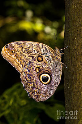 Photograph - The Owl Butterfly On Tree by Terry Elniski