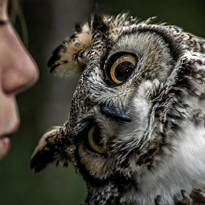 Photograph - The Owl Whisperer by Phil Cardamone