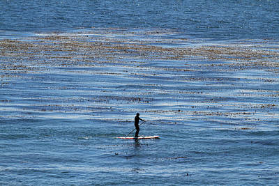 Photograph - The Paddle Boarder by Tom Kelly