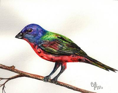 Painting - The Painted Bunting by Chris Bajon Jones
