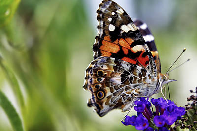 Photograph - The Painted Lady And The Black Knight by Jason Politte