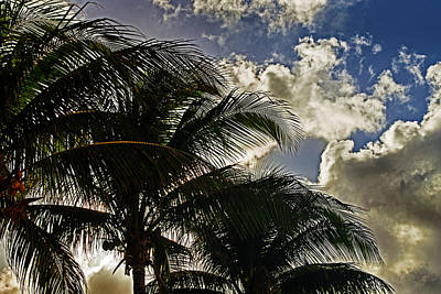 Photograph - The Palm Before The Storm by Bill Swartwout