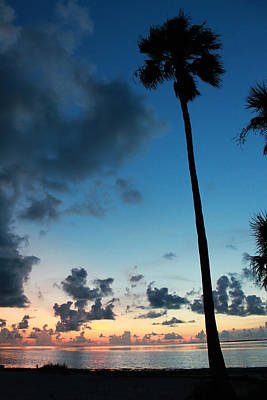 Photograph - The Palm Majestic Sunset Beach Tarpon Springs Florida by Robin Lewis