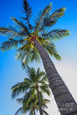 St Thomas Photograph - The Palms by Jon Neidert