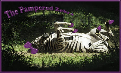 Photograph - The Pampered Zebra by LeeAnn McLaneGoetz McLaneGoetzStudioLLCcom