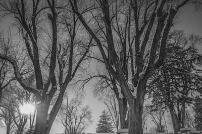 Light Photograph - The Park In Black And White by Gloria Pasko