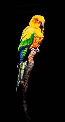 The Parrot Art Print by Dasmin Niriella