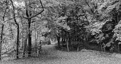 Photograph - The Path  7d07633b by Guy Whiteley