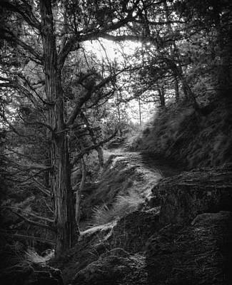Photograph - The Path by Coby Cooper