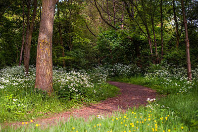 Photograph - The Path In The Spring Park. Netherlands by Jenny Rainbow