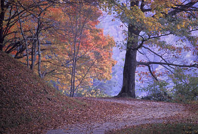 Photograph - The Path by Jim Dollar