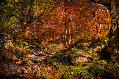 Orangem Tree Photograph - The Path by Stefano Termanini