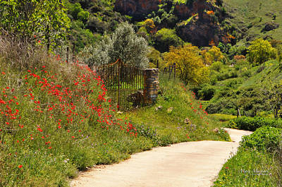 Path Through The Poppies Photograph - The Path Through The Valley by Mary Machare