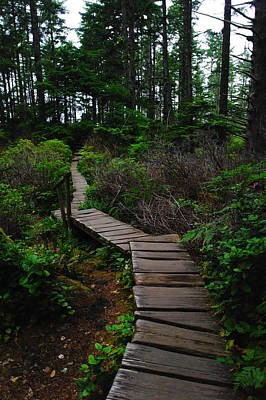 The Path To Cape Flattery Art Print by Jeff Swan