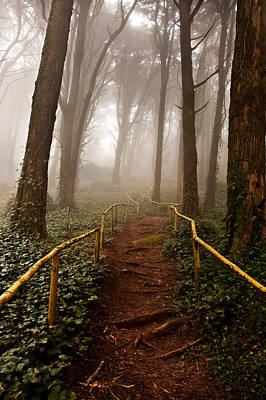 Portugal Photograph - The Pathway by Jorge Maia