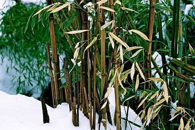 The Patience Of Bamboo Original