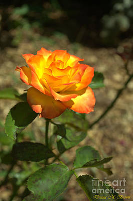 Photograph - The Peace Rose by Donna Brown