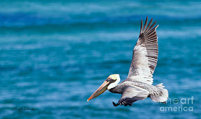 Photograph - The Peaceful Pelican by Michelle Wiarda