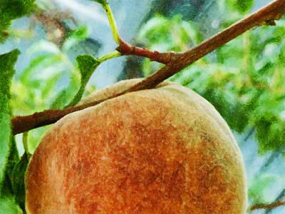 The Peach Art Print by Steve Taylor