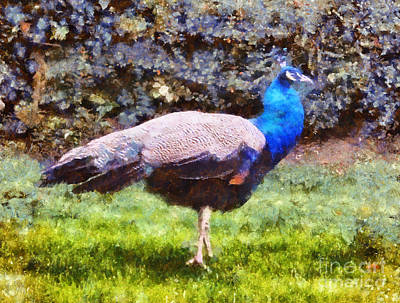 Home Gift Photograph - The Peacock by Pixel  Chimp