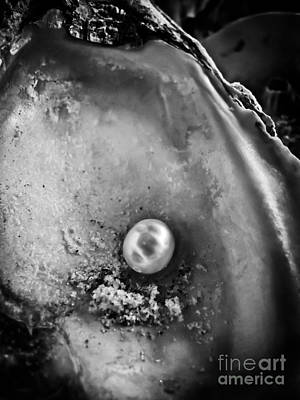 Photograph - The Pearl by Colleen Kammerer