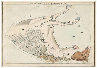 Pegasus Drawing - The Pegasus And Equuleus  Constellation by Mary Evans Picture Library