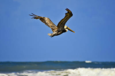 Art Print featuring the photograph The Pelican And The Sea by DigiArt Diaries by Vicky B Fuller