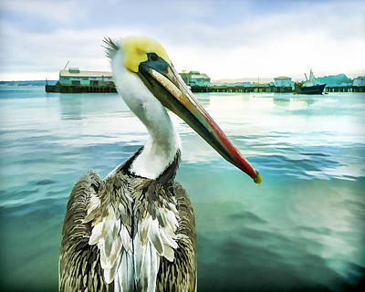 Pelican Digital Art - The Pelican Perspective  by Priya Ghose