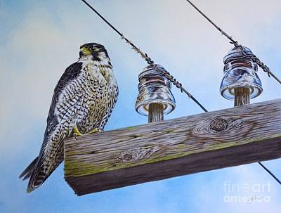 Peregrine Falcon Painting - The Perfect Predator by Greg and Linda Halom