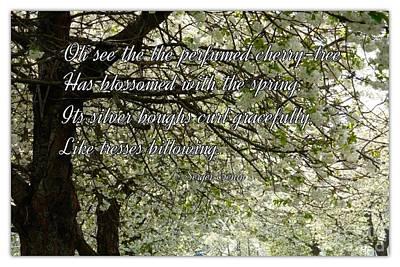The Perfumed Cherry Tree 1 Art Print