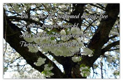 The Perfumed Cherry Tree 2 Art Print