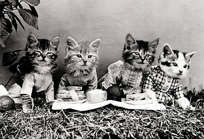 Lolcat Photograph - The Picnic In 1914 by Science Source