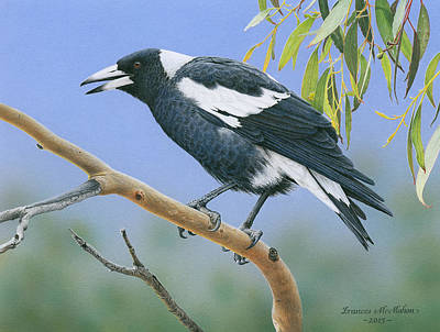Painting - The Pied Piper - Australian Magpie by Frances McMahon