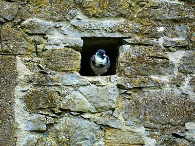Photograph - The Pigeon Hole by Norma Brock