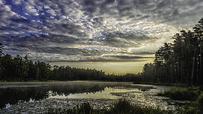 New Jersey Pine Barrens Photograph - The Pines by Louis Dallara