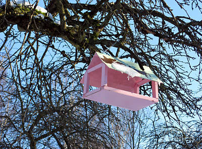 Photograph - The Pink Bird Feeder by Ausra Huntington nee Paulauskaite