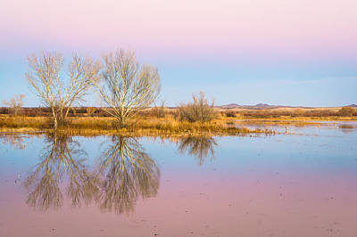 Evening Photograph - The Pink Sky Over The Golden Field - Bosque Del Apache, New Mexico by Ellie Teramoto