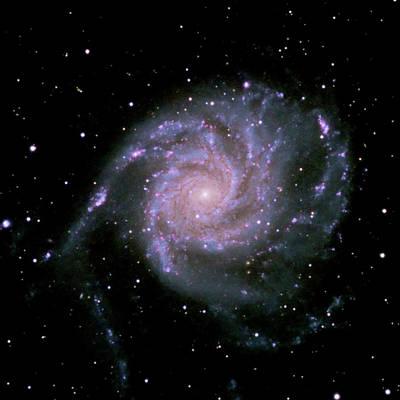 Photograph - The Pinwheel Galaxy by A. V. Ley