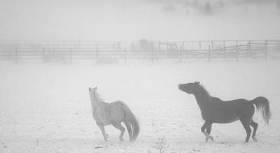 The Play Of Horses Art Print by Michael Dohnalek