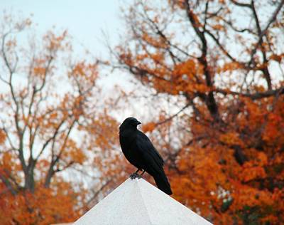 Fall Scenes Photograph - Crow Found The Perfect Pyramid Point by Gothicrow Images