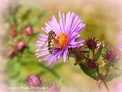 Photograph - The Pollinator by Kimberly Woyak